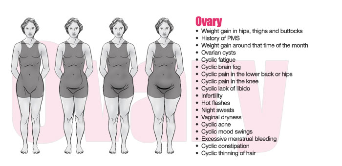 Ovary Body Shape